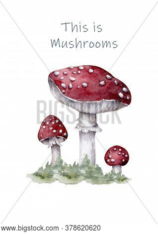 Amanita Muscaria. Fly Agaric Mushroom. White Spotted Beautiful Red Mushrooms In Natural Context. Han