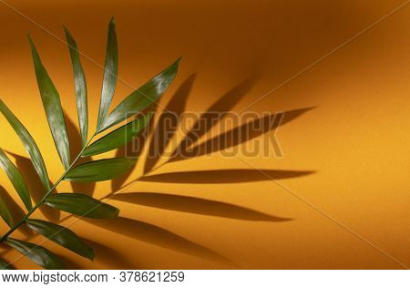 Tropical leaf on yellow paper background. Top view, minimal design template with copyspace.
