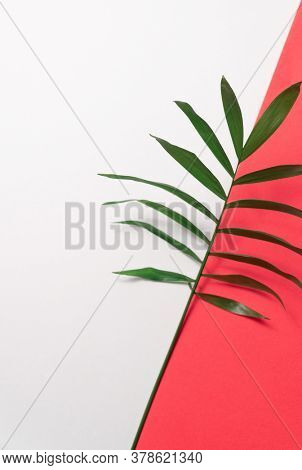 Tropical leaf on red and white paper background. Flat lay, top view, minimal design template with copyspace.