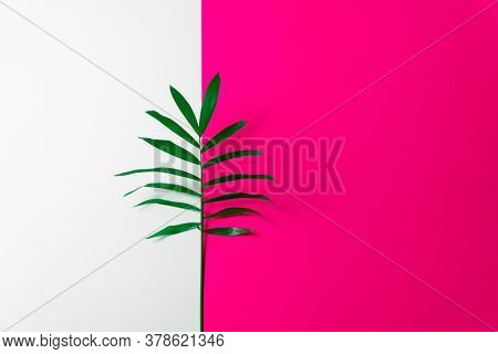 Tropical leaf on pink and white paper background. Flat lay, top view, minimal design template with copyspace.