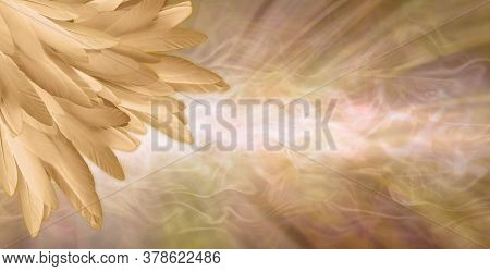 Golden Angel Feather Message Banner Background - A Pile Of Random Long Golden Feathers In Left Corne