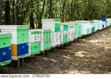 Wooden Hives In An Apiary With Bees. Apiculture.