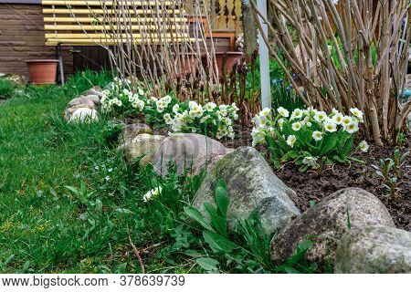 The Flowerbed On The Plot Is Fenced With Small Stones. Several Shrubs And Primrose Flowers Grow On T