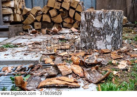 Birch Bark Is Scattered On The Concrete Path And Lawn, And Next To It Is A Birch Stump Prepared For
