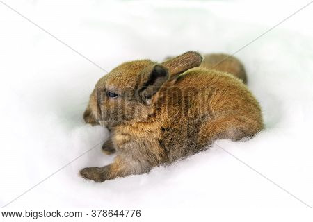 Adorable Newborn Puppy Bunny Sleep Together On Cotton Bed Blue Background. Baby Lovely Rabbit Nap On