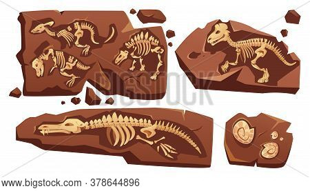 Fossil Dinosaurs Skeletons, Buried Snails Shells, Paleontology Finds. Vector Cartoon Illustration Of