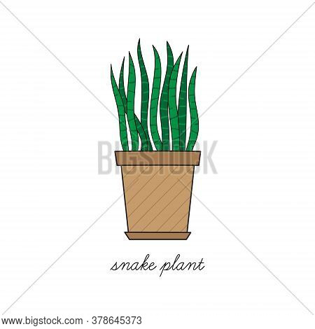 Snake Plant, Mother-in-law's Tongue Vector Illustration Graphic. Hand Drawn Cute Outlined Indoor Pla