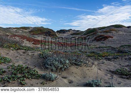 Dune Vegetation, Including The Invasive Ice Plant, Carpobrotus Edulis, On Sand Dunes At Point Reyes