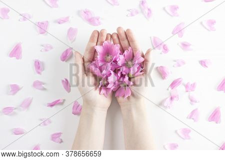 Frame Of Pink Flowers, Petals And Green Leaves On Black Chalckboard Flat Lay Top View Copy Space. Bl