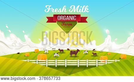 Milk Farm Vector Landscape With, Grazing Cows, Fence, Green Hills, Sun, Red Ribbon. Organic Farming