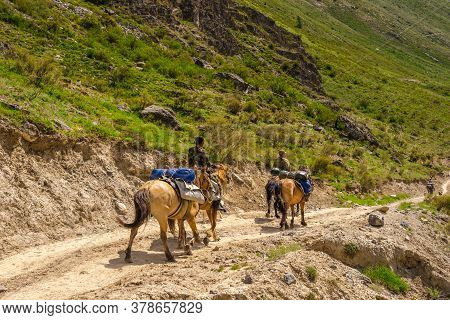 Mountain Guide On Horseback With Dogs On The Road In The Mountains