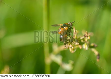 Two Wasps On Top Of Each Other In The Grass.