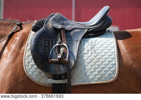 Sport Horse Close Up And Old Leather Saddle Ready For Dressage Training.  Equestrian Sport Backgroun