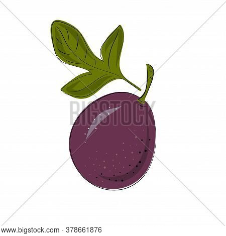 Vector Set Of Passion Fruit, Passionfruit, Maracuya Purple Colors. Whole On A White Background.