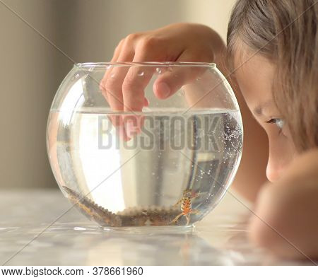 Newt Under Water Swim In Round Aqua. Little Girl Observe Triton. Child Study Salamander Amphibia Ani