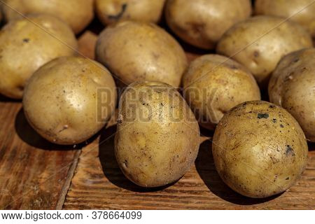 Young Potatoes Of Different Sizes Lie On A Wooden Table In The Sun, With A Blur And Perspective Rece