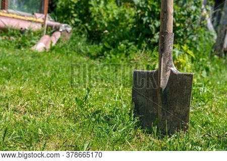 A Garden Bayonet Shovel Is Stuck In The Ground With Green Grass Against The Background Of Bushes And