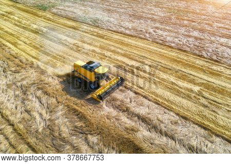 Aerial View Of Combine Harvester Is Harvesting Wheat At Sunset In Summer. Agriculture. Landscape Wit