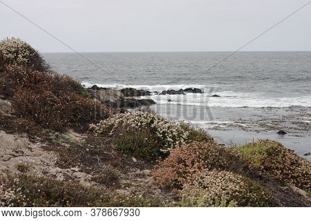 This Is An Image Of The Coastal Area Of Asilomar State Beach In Pacific Grove< California.