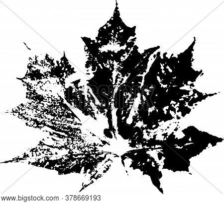 Leaf Brush. Black Ink Decal Maple Leaf. Suitable For Use As A Brush.