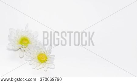 Two Bright White Gerbera Flowers Of Different Sizes Isolated On White. Copy Space For Text, Airy Lig