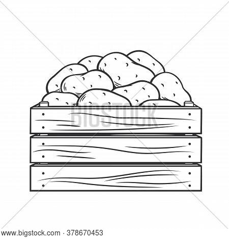 Ripe Potatoes In Wooden Box. Vector Illustration Of Autumn Harvest Of Potatoes In Modern Engraved St