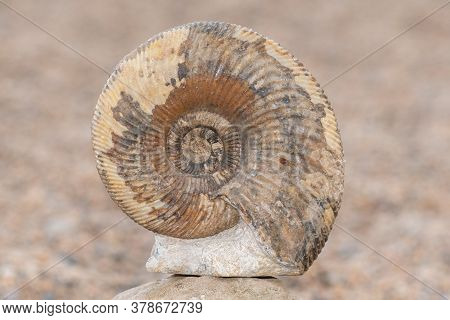 Close Up Of An Ammonite Fossil With A Sandy Beach In The Background