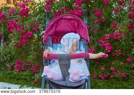 Baby In A Stroller With A Rose In His Hand, Little Girl In A Stroller Holds Out A Rose Flower In Her
