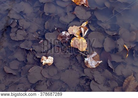 Leaves Of Trees In Muddy Water In Puddles On The Road, Autumn Season During Leaf Fall And Rains