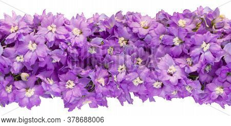 Seamless Endless Horizontal Banner Made Of Lilac Delphinium Flowers Isolated On White Background. To