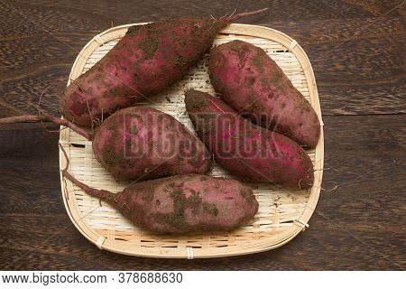 Harvested Sweet Potato With Soil On Bamboo Sieve