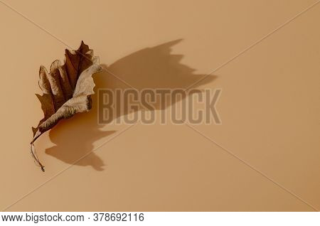 Autumn Arrives. Fall Background. Minimal. Vintage Fashionable Autumnal Concept