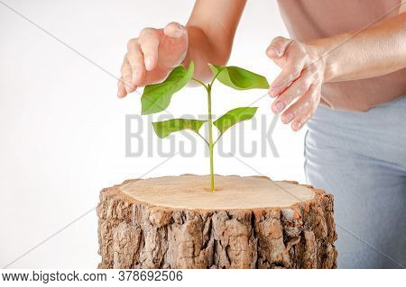 Concept New Life. Green Plant Woman Hands. Plant Growing In Stump. Insurance Symbol.