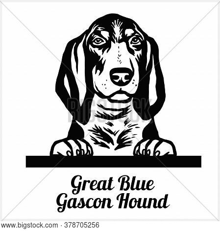 Great Blue Gascon Hound - Peeking Dogs - Breed Face Head Isolated On White