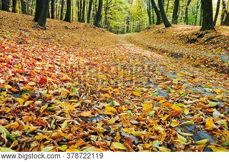 Fallen Leaves In Autumn Forest. Trail In The Autumn Forest Is Covered With Fallen Leaves