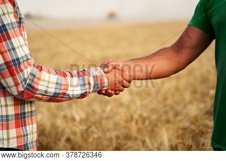 Farmer And Agronomist Shaking Hands Standing In A Wheat Field After Agreement. Agriculture Business