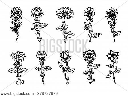 Vector Flowers Set, Black Line Art Isolated On White Background, Floral Design Collection, Outline F