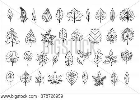 Vector Line-art Leaves, Outline Illustration, Black Linear Leaves Isolated On White Background, Outl