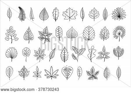 Vector Line-art Leaves, Outline Illustration, Black Linear Leaves Isolated On White Background, Outl