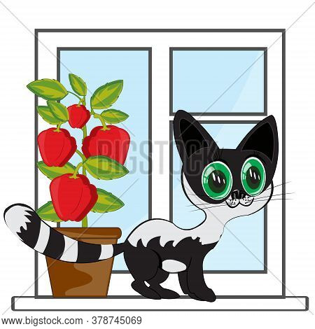Window In Apartment And Beautiful Black Cat