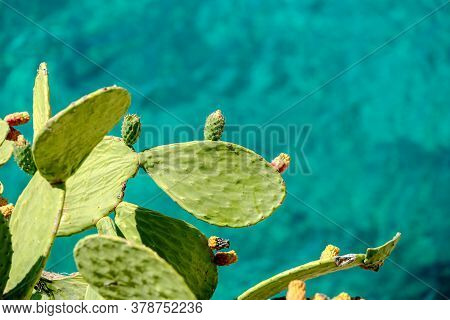 Close Up Green Cactus Near The Blue Sea