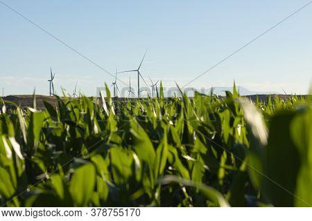 New Wind Turbines Over The Corn Fields In Aragon, Spain