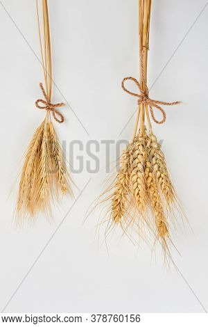 Wheat And Barley Ears, Top View. Ears Of Wheat And Barley. Concept Of Harvest.