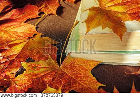 Autumn background, Back to school concept. Stack of old books on the table among the dry yellow maple autumn leaves, Back to school design. Back to school composition. Back to school still life. Selective focus at the book\'s spine
