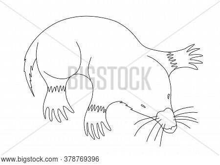 Coloring Book With A Mole On A White Background