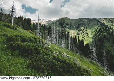 Mountain Furmanov Peak In Summer Landscape With Dead Trunks Of Fir In Almaty, Kazakhstan, Zailiysky