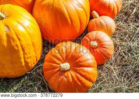 Natural Autumn Fall View Pumpkin On Eco Farm Background. Inspirational October Or September Wallpape