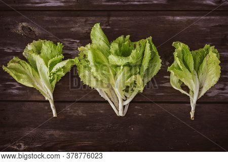 Pattern From Fresh Lettuce Leaveson A Wooden Dark Table. Batavia Salad. Authentic Still Life With Gr