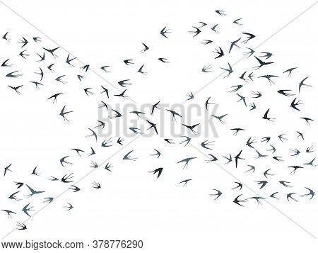 Flying Martlet Birds Silhouettes Vector Illustration. Nomadic Martlets Bevy Isolated On White. Wingy