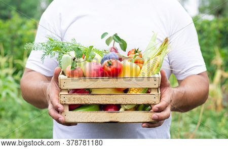 Farmer Holding Wooden Crate Full Of Fresh Organic Vegetables And Fruits. Eco Food Concept